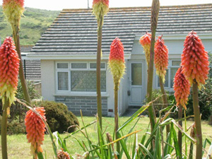 Pollymoor Holidays     Holywell Bay     Self Catering
