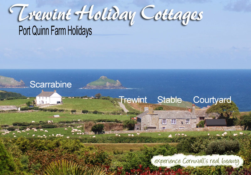 Terrific Port Quin Farm Holidays Port Isaac Self Catering Cottages Home Interior And Landscaping Oversignezvosmurscom